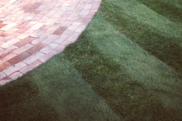 Call us to discuss the costs and considerations of purchasing and installing turf